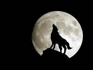 wolf.74265